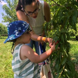 Picking fruit at our local farm