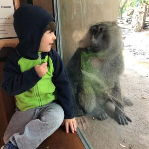 Staring contest with a baboon at the Rochester zoo