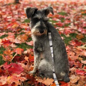 Overwhelmed by her first glimpse of fall leaves in Rouses Point, NY