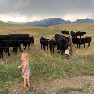 Saying 'hi' to some cows on a hike in Boulder
