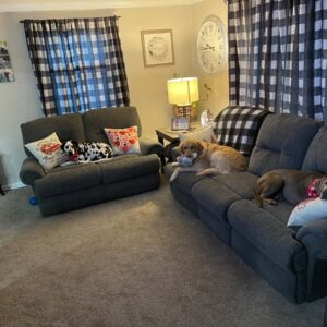 Our three pups Zoey, Tinsel, and Silo relaxing in our living room